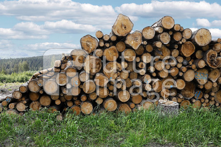 NATURE ART: Holzstapel / Wood Pile Bodypainting