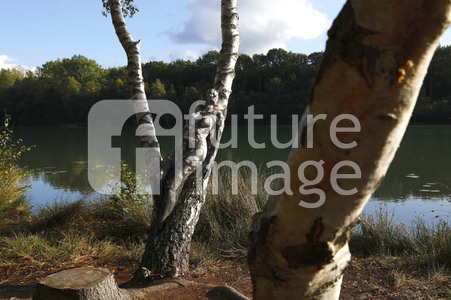 NATURE ART: Birken / Birch Trees Bodypainting